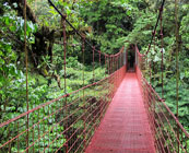 Montverde Cloud Forest
