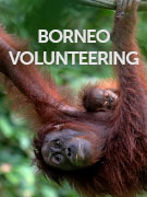 Borneo volunteering