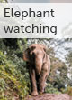 Elephant watching