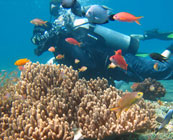 Marine conservation in Thailand