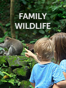 Family wildlife