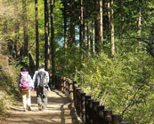 Walking trails in Japan