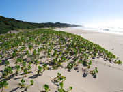 Rocktail beach, KwaZulu-Natal. Photo by Richard Madden