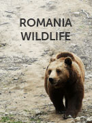 Romania wildlife