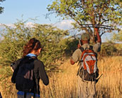 Walking safaris