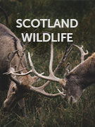 Scotland wildlife