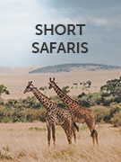 Short safaris