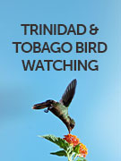 Trinidad and Tobago bird watching