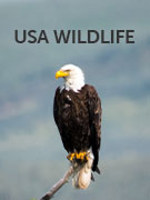 USA wildlife