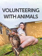 Volunteering with animals