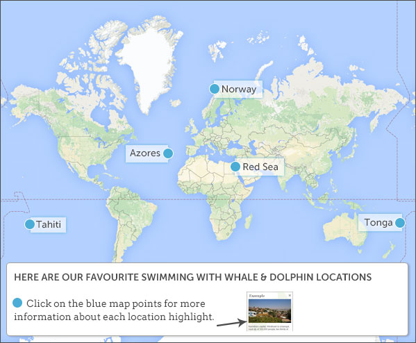 Where To Swim With Whales And Wild Dolphins - Norway map highlights
