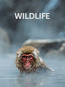 Wildlife travel guide