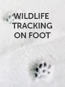Wildlife tracking on foot
