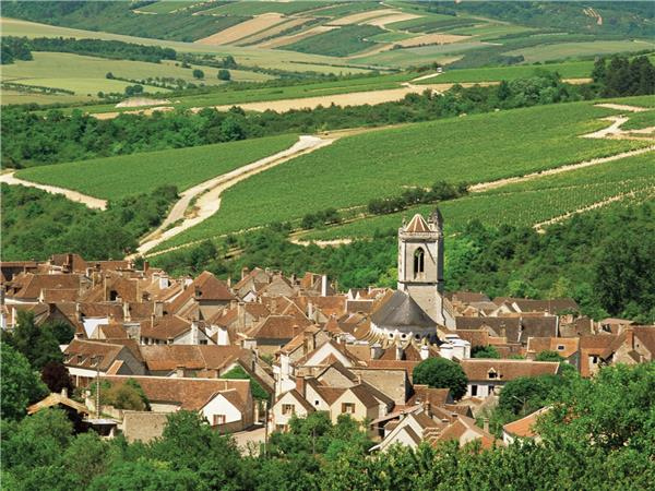 Burgundy walking holiday, Chablis Vineyards