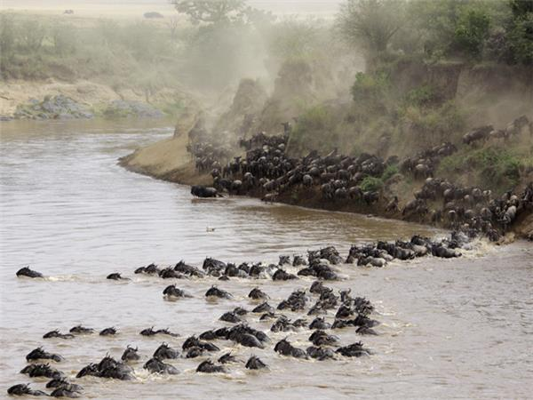 East Africa adventure holiday, safari, gorillas & beach