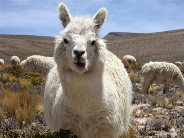 Adventure holiday in Peru