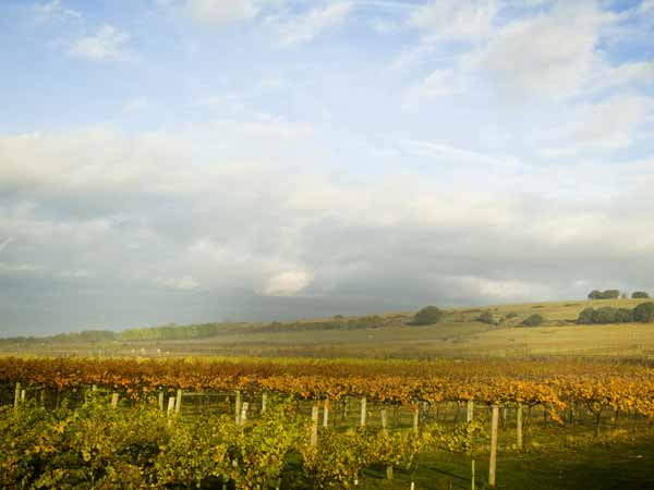 Vineyard tours & shop in West Sussex, England