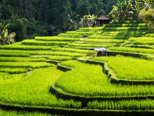 Bali yoga and wellness holiday