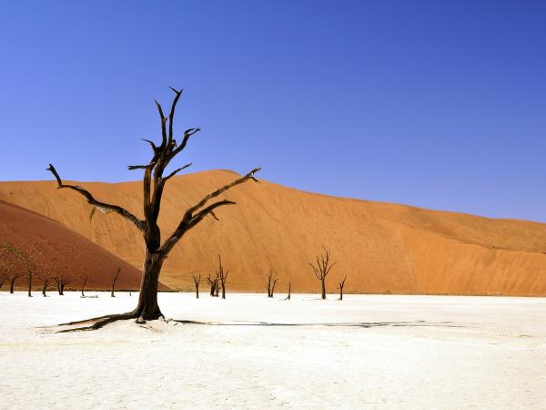 Namibia small group holiday, sand dunes & safari
