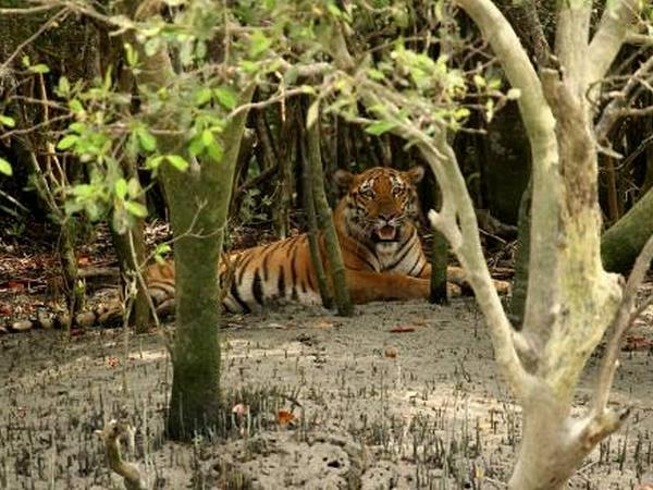 Bangladesh tiger safari holiday