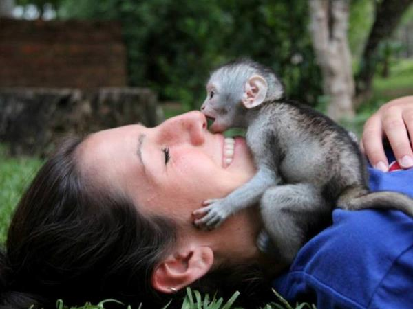 Volunteer with monkeys in South Africa