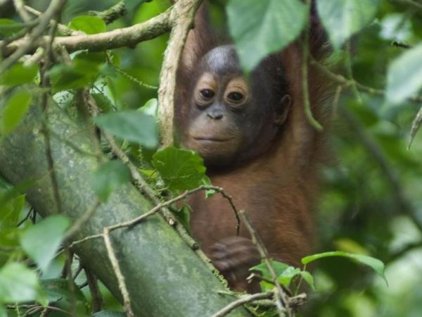 Borneo holiday, culture and wildlife