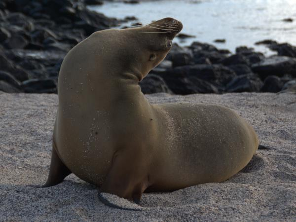 Galapagos tailor made adventure holiday