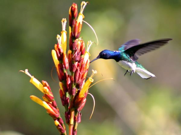 Trinidad and Tobago bird watching holidays