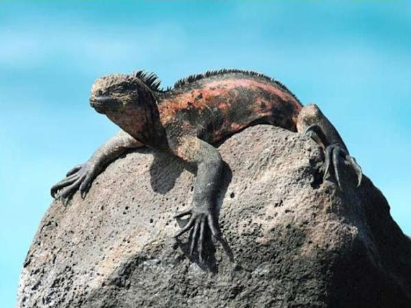 Galapagos 7 day cruise