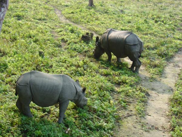 Chitwan jungle safari and home stay