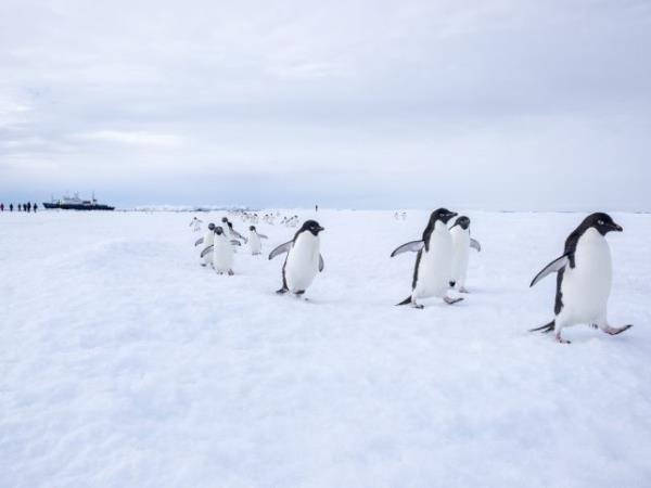 Antarctica and New Zealand Subantarctic Islands Wildlife Cruise