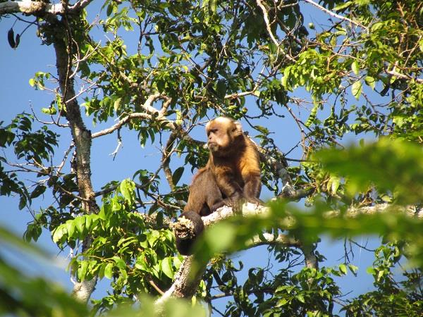 Bolivia holiday, Madidi National Park & ecolodge