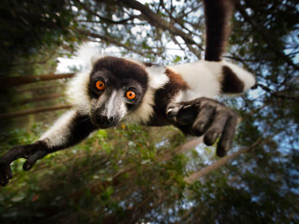 Madagascar holidays, island adventure