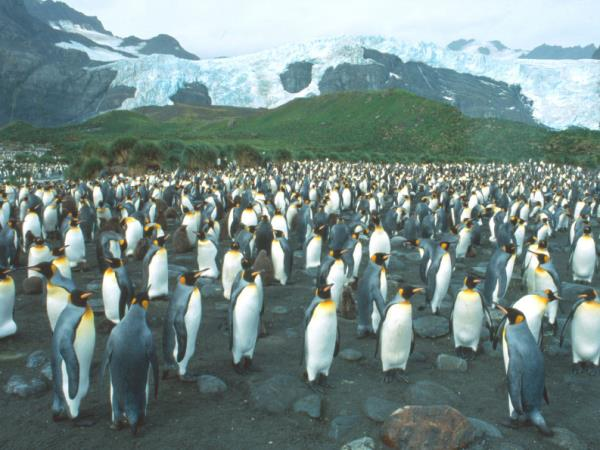Antarctica, Falklands & South Georgia small ship cruises