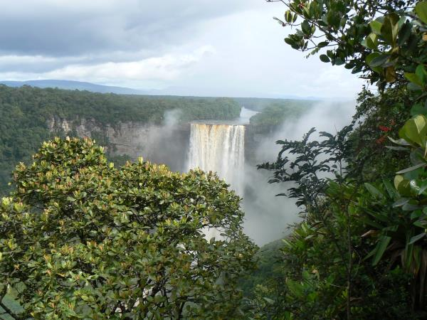 Guyana and Trinidad nature tour