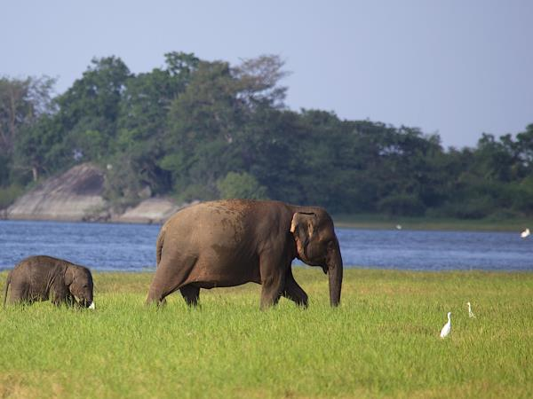 Sri Lanka wildlife holiday
