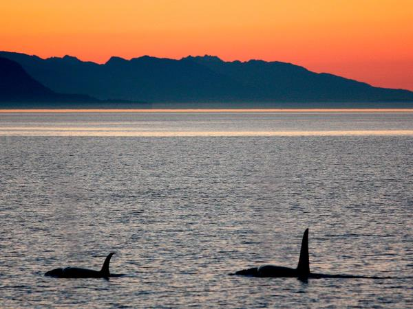 Alaska's Islands cruise, whales & glaciers
