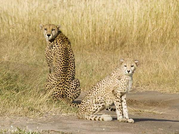 Kenya holidays, safari and beach holiday