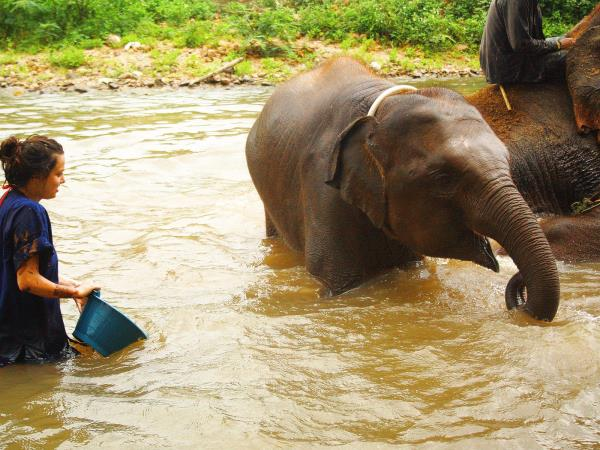 Thailand elephant volunteering project