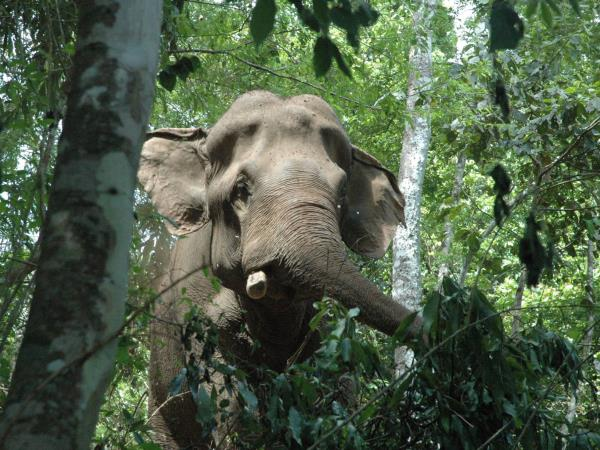 Thailand Elephant conservation volunteering