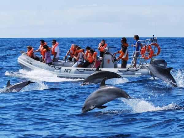 Azores family adventure holiday, whales and dolphins