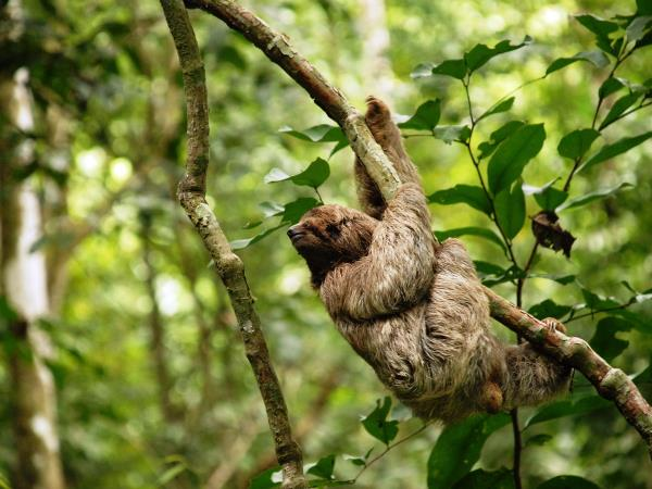 Costa Rica wildlife holiday, Jungles & Beaches