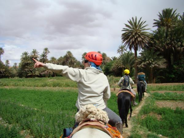 Horse riding holiday in Morocco