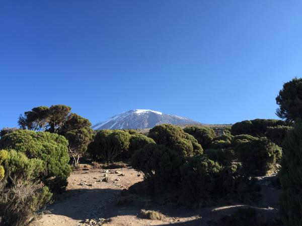 Family Kilimanjaro Climb & Serengeti safari holiday