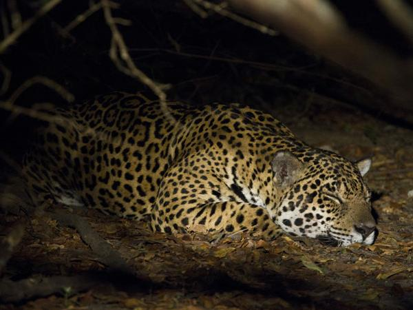 Brazil wildlife holiday, Jaguars and Amazon