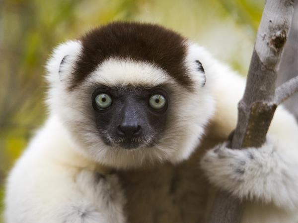 Madagascar wildlife and beaches holiday