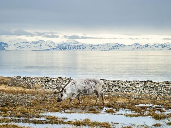 Polar bear expedition in Spitsbergen