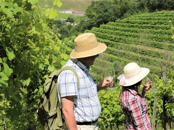 Italy wine tour for over 50s