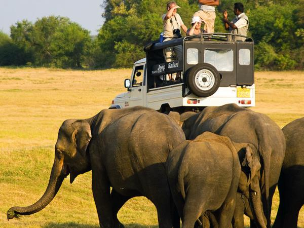 Sri Lanka budget wildlife tours