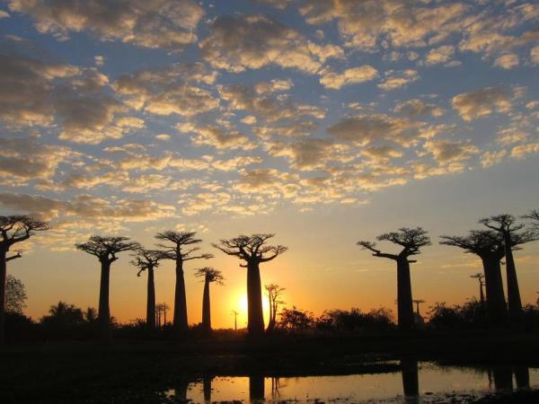 Wild Madagascar tour, small group